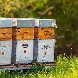 Achat de ruches en ligne pour les apiculteurs | Obee Shop