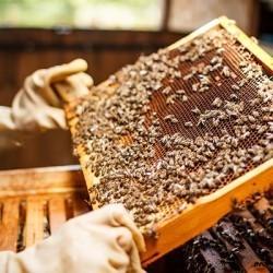 Rucher : achat de matériel d'apiculture pour conduire son rucher