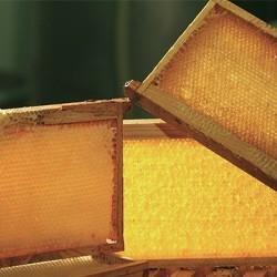 Cadres de ruche et cires d'abeille pour apiculteurs | Obee Shop