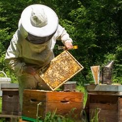 Matériel d'apiculture & équipement apiculteur en ligne